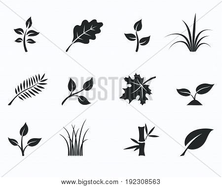 Vector illustration of black monochrome floral icon set with silhouettes of herbs grass and leaves