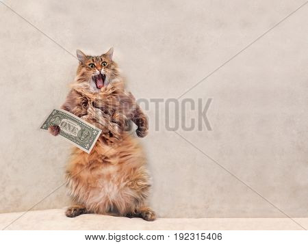 The Big Shaggy Cat Is Very Funny Standing.shelter 10