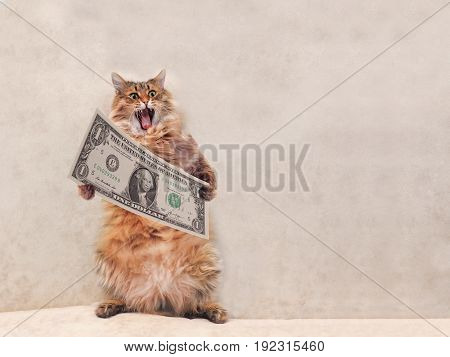 The Big Shaggy Cat Is Very Funny Standing.shelter 4