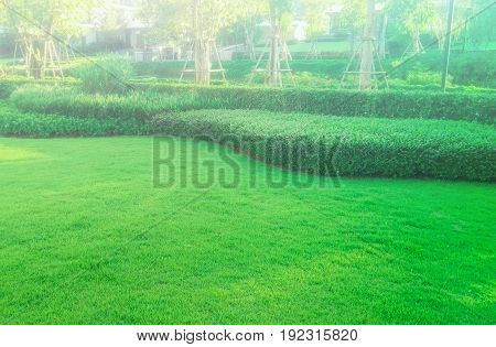 Green lawn with fog in the morning, the front lawn for background,garden landscape design