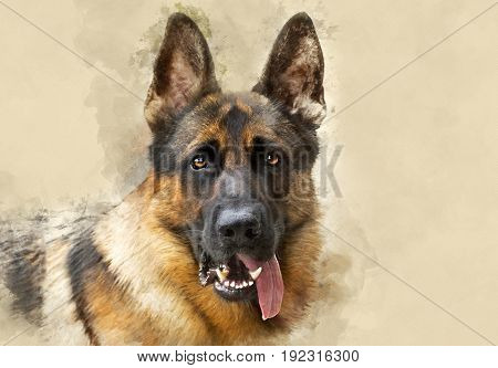 A very alert German shepherd Portrait ,  with textured filter