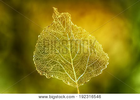 Golden Macro leaf in Autumn eroded by the cycle of the seasons