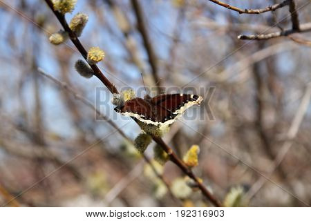 The butterfly sitting on the bush branch