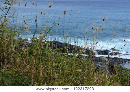Hawaiian pili grass above ocean water waves