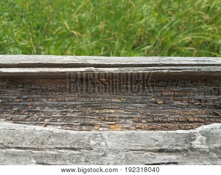 weathered and dilapidated wood railing outdoors with plants
