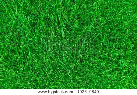 Green grass in the yard Look and feel comfortable