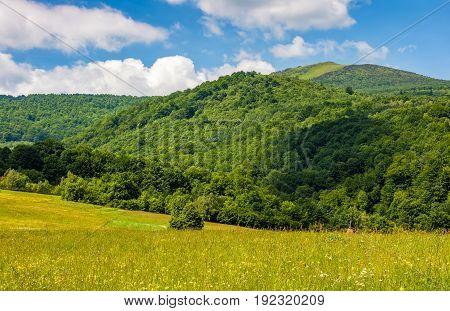 Field With Wild Herbs In Summer Mountain Landscape