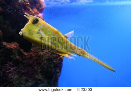 Strange Yellow Fish On A Blue Background