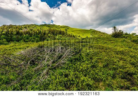 Grassy Meadow On Hillside Of Mountain Range