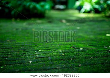Bricks path covered with green moss and leaf selective focus frame blurred background