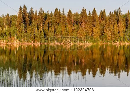 Beautiful scenery with forest water grass fragments of trees and their reflections in the smooth water of the lake in the evening light