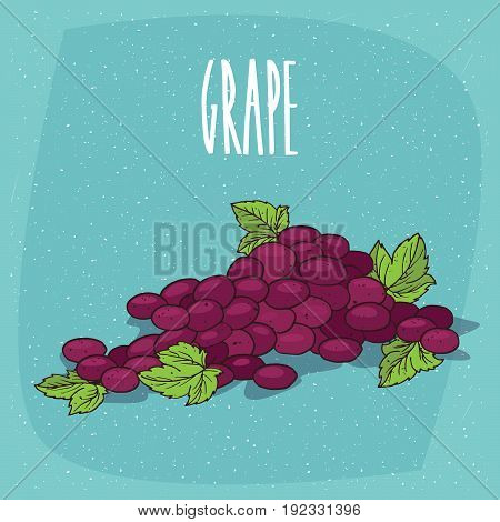 Isolated Bunch Of Grapes Or Part Of Vine