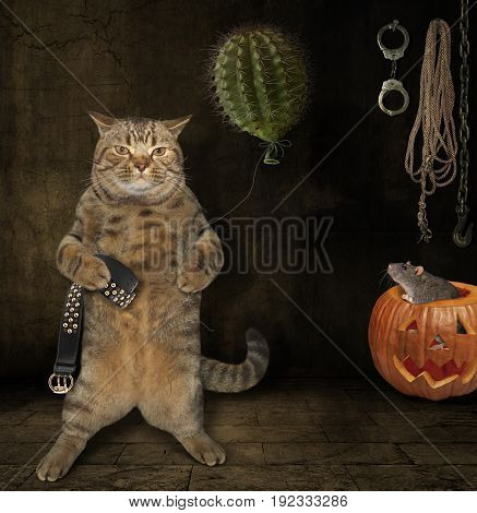 The scary cat is holding a cactus balloon and a belt. The rat hides inside a pumpkin.