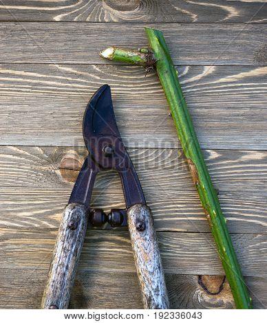Loppers Pruning Shears Wood Planks Plant Vine Stalk
