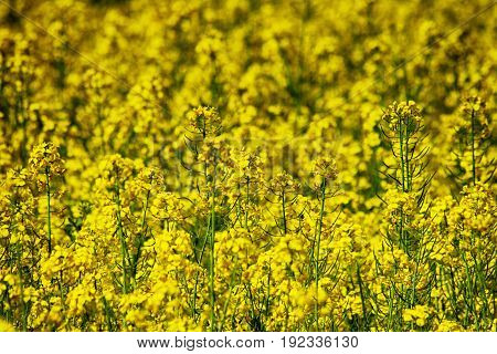 Yellow Flower Background