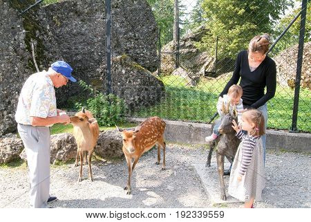 People Who Feed And Pat The Fawns At The Zoo