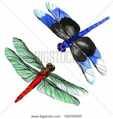 Insect dragonfly set in a watercolor style isolated. Aquarelle dragonfly for background