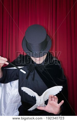 Magician Performing A Trick With Pigeon, Color Image, Red Background