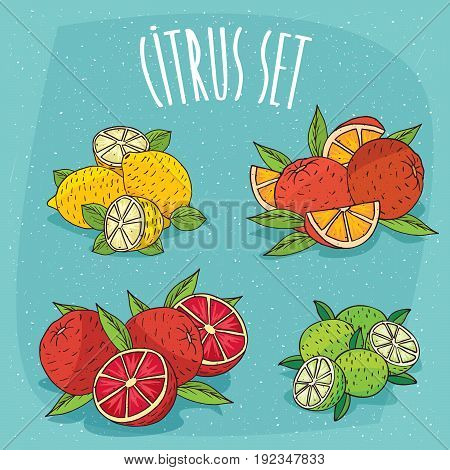 Set Of Isolated Cliparts Organic Citrus Fruits