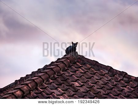 Silhouette Of Black Cat On The Roof