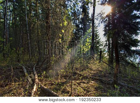 Single ray of light filtering in a Forest at Dore Lake