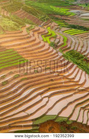 Terraced ricefield Panorama in water season at Mu Cang Chai , Vietnam
