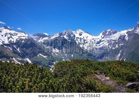 Hohe Tauern in Austria with snowcapped mountains and creepng pine in foreground