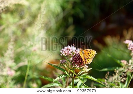 Colorful butterfly on a flower with green blury background