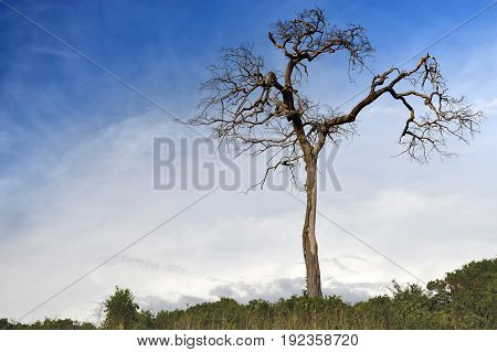 Death Tree Stand Alone.