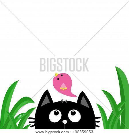 Black cat face head silhouette looking up to bird on head. Green grass dew drop. Cute cartoon character. Kawaii animal. Baby card. Pet collection. Flat design style. White background. Isolated Vector