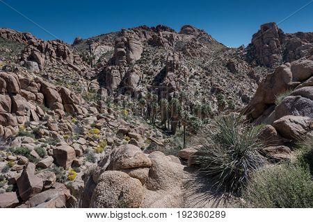 Dry Desert Scene spreads out over Joshua Tree