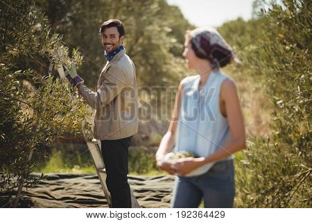 Happy young couple looking at each other while collecting olives at farm