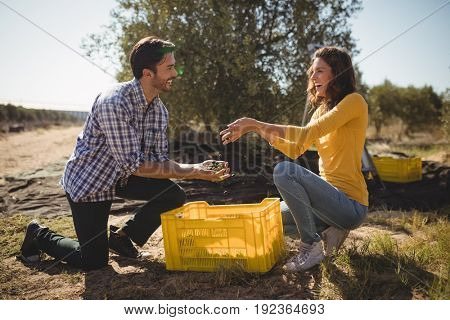 Cheerful young couple holding olives while kneeling at farm