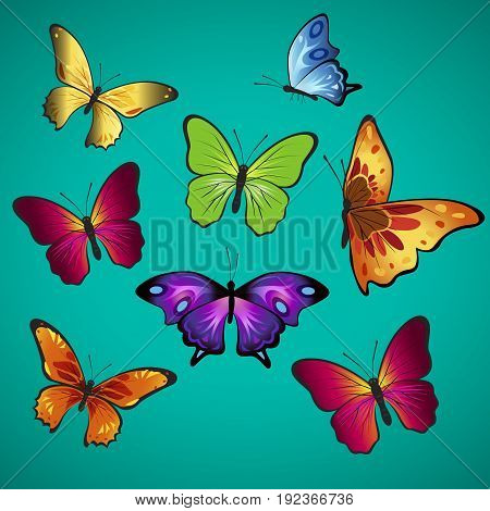 beautifully butterflies; Amiral butterfly; Speckled Wood butterfly ; White butterfly; Wall brown butterfly