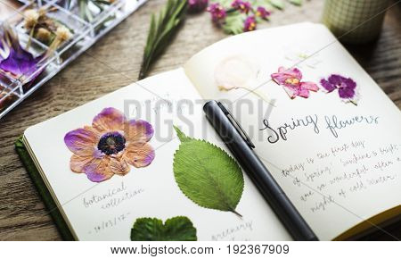 Detail of Dried Flowers Collection in Notebook Handmade Work Hobby