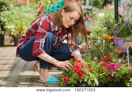 Side view of man and woman gardeners sitting and taking care of flowers and plants while doing agriculture job.