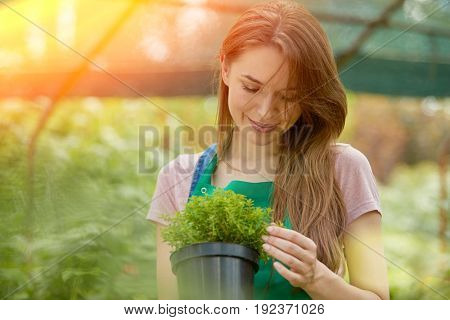 Young gardener woman standing with potted plant and looking at camera in hothouse.