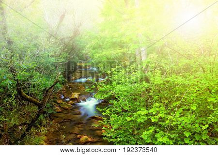 Fast mountain river flowing among mossy stones and boulders in green forest. Edited.