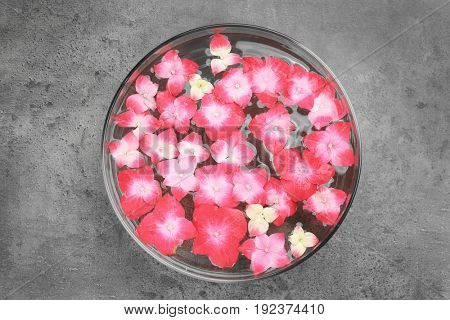 Bowl with water and hortensia flowers on grey background