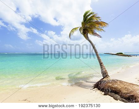 Palm tree at Caribbean Sea beach