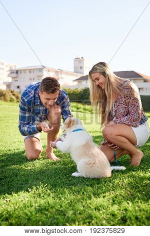 Young couple in park training puppy to shake paw, dog training obedience