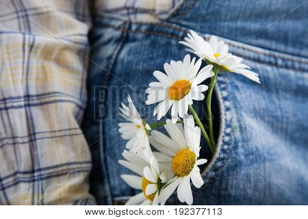 Chamomile in the pocket of a summer jeans trousers