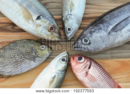 Mix Fresh Sea Fishes For Cooking