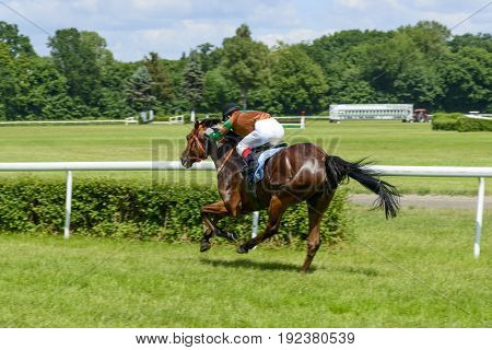 WROCLAW, POLAND - JUNE 18: Vanilla horse on the race for the 3-year-old Arabian horses group III on June 18, 2017 in Wroclaw, Poland. This is an annual race on the track Partynice open to the public.