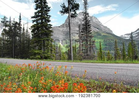 Scenic route through Glacier national park