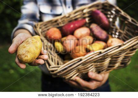 Potato in a wooden bucket