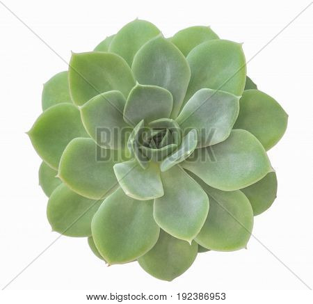 Close-up Rectangular arrangement of succulents cactus succulent in a planter white isolated background