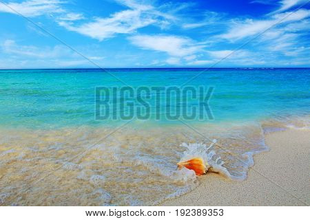 Seashell on beach and sea wave. Summer ocean landscape as background.