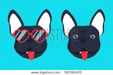 French bulldog dog head dog face illustration .Beautiful french bulldog puppy black fawn dog looks out the glasses and without glasses. Dog in glasses adorable picture