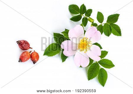 dried berries and dogrose flowers with leaves on white background
